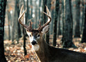 Previous Trophies: Whitetail 130-139